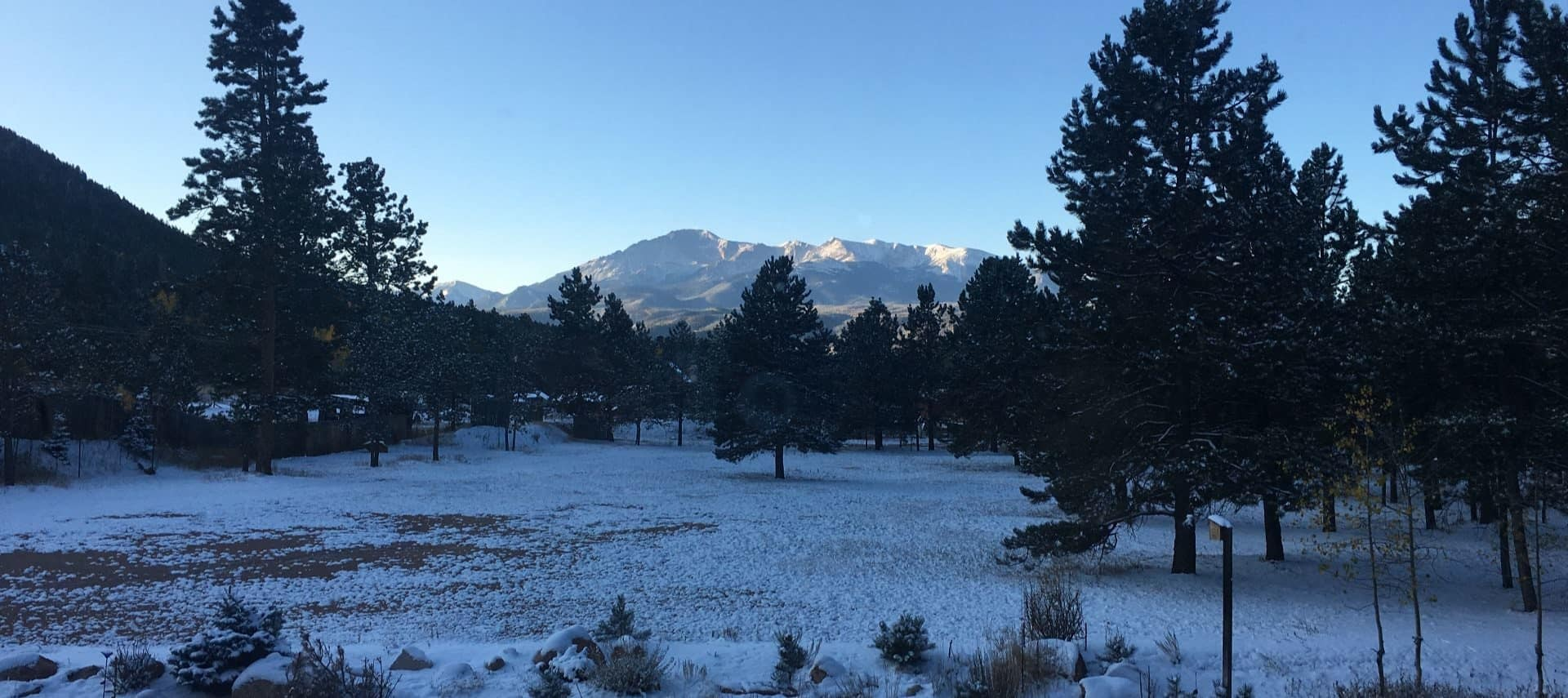 Multiple pine trees with snow on the ground and mountain range in background at sunrise