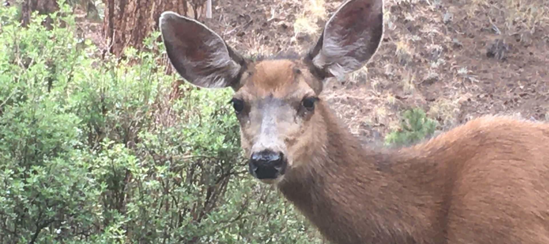 Close up view of doe standing near green shrubs
