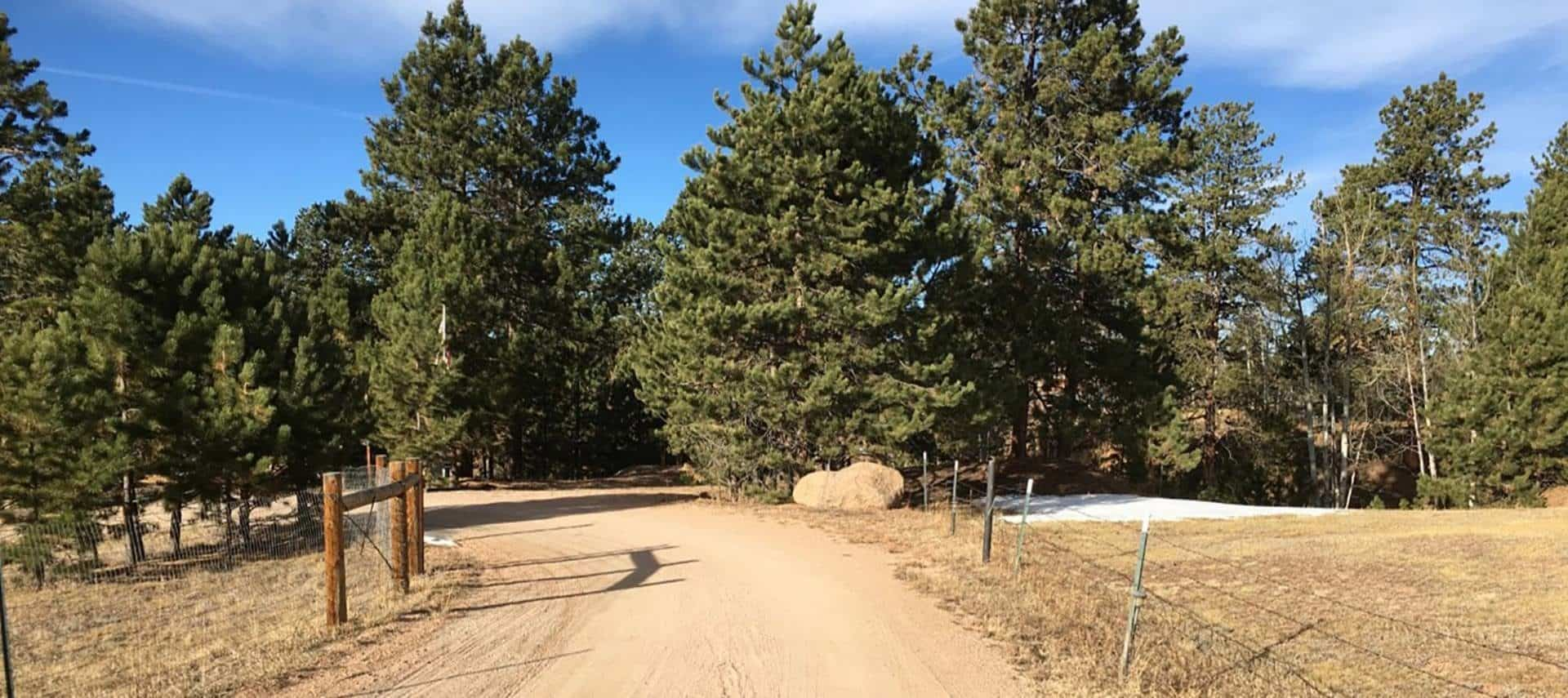 Dirt road leading to the property surrounded by large pine trees