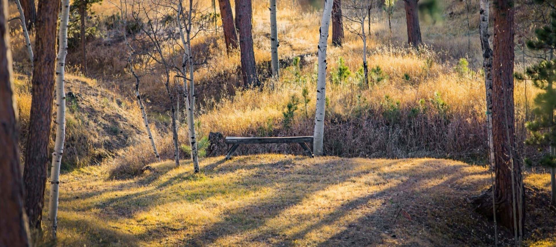 Cut meadow grass with large wooden bench surrounded by tall grasses and trees with the sun shining through